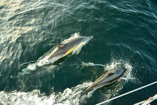 delfiner i spanien