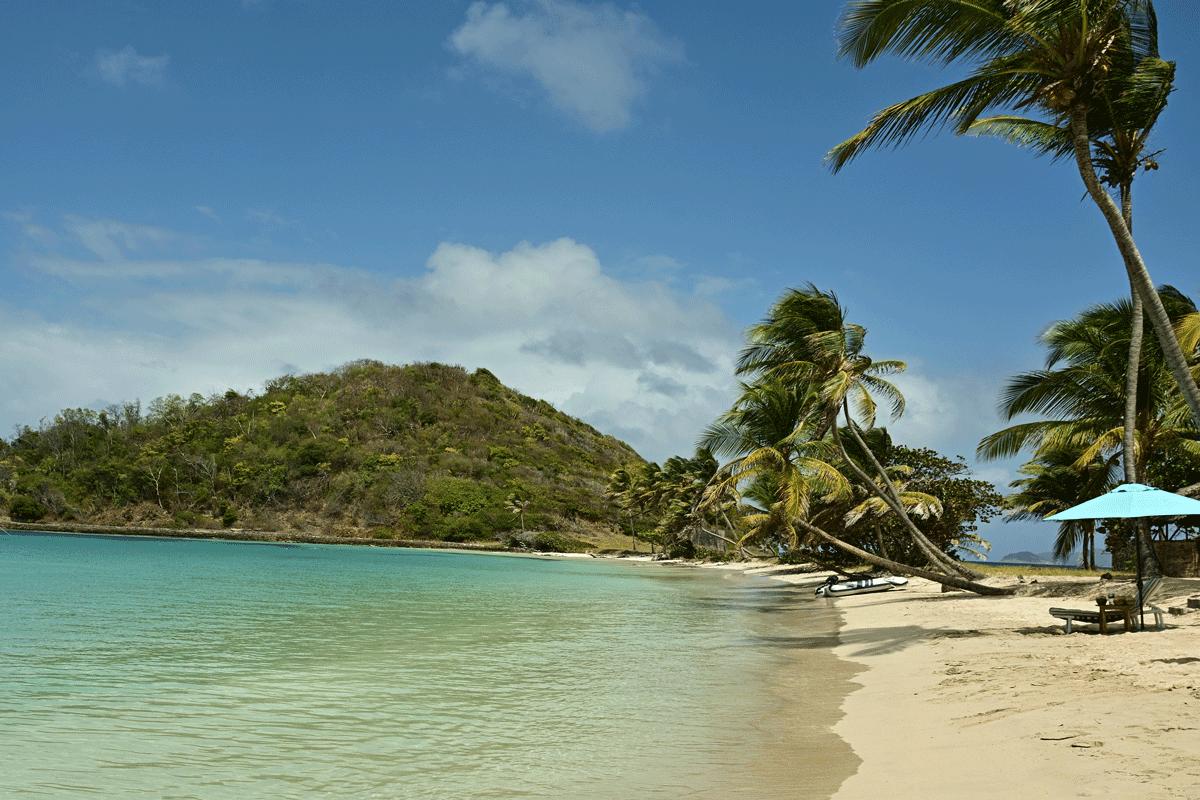 beach palmtrees